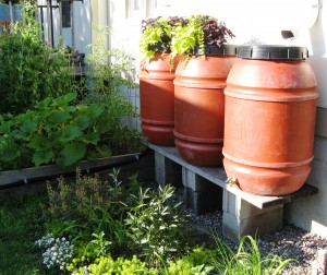 Barrels in Our Garden